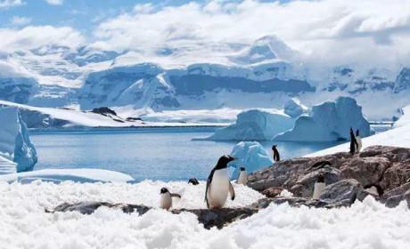 南极玩家指南 —— 入门篇
