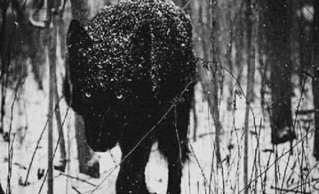 《荒原狼》:旷野上的燃烧
