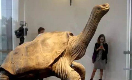 平塔岛象龟孤独的乔治:当地球上只剩下了你