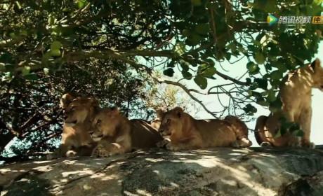 塞伦盖蒂:动物界最大迁徙,生命与生命的较量